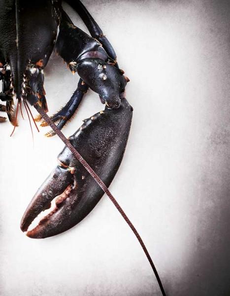 homard-produits-ok